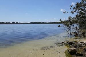 Hornet Lake in Canaveral Groves in Brevard County, FL (23 of 37)
