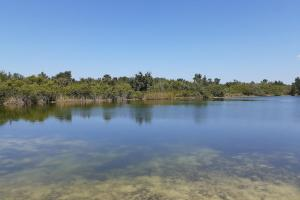 Hornet Lake in Canaveral Groves in Brevard County, FL (32 of 37)