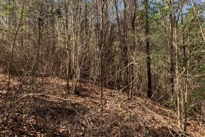 Catahoula Hills 10 acres Timber, deer and Turkey Hunting - Catahoula Parish, LA