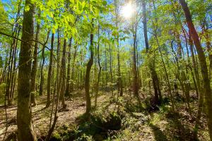 The Sweet Water Bashi Hunting & Timber Investment - Marengo County, AL