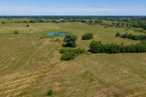 12 ac in Kaufman County, Building Site, Cattle Tract, Shade Trees