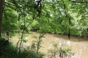 Hardwood Tract/Creek Fishing & Hunting - Lowndes County, AL