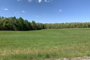 155 Acre Row Crop/Timber tract - Henderson County, TN