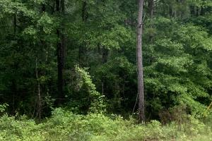 Hardwood timber tract - Union Parish, LA