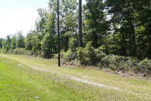 County Road 229 Wooded Tract  in Bradford County, FL (28 of 29)