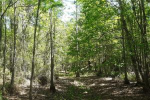 County Road 229 Wooded Tract  in Bradford County, FL (22 of 29)