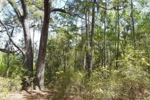 County Road 229 Wooded Tract  in Bradford County, FL (25 of 29)