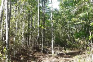 County Road 229 Wooded Tract  in Bradford County, FL (6 of 29)