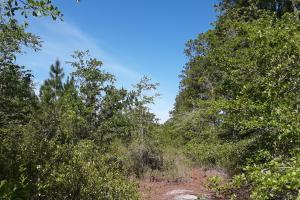 County Road 229 Wooded Tract  in Bradford County, FL (3 of 29)