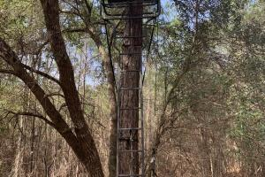 Florida Panhandle Hunting and Timber Retreat in Walton, FL (53 of 77)