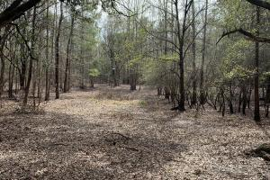 Florida Panhandle Hunting and Timber Retreat in Walton, FL (76 of 77)
