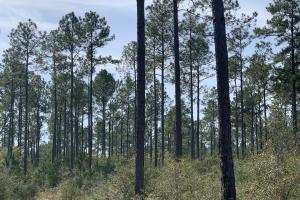 Florida Panhandle Hunting and Timber Retreat in Walton, FL (56 of 77)