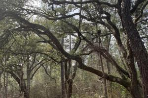 Florida Panhandle Hunting and Timber Retreat in Walton, FL (54 of 77)
