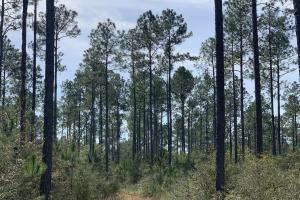 Florida Panhandle Hunting and Timber Retreat in Walton, FL (55 of 77)