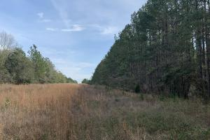 Florida Panhandle Hunting and Timber Retreat in Walton, FL (70 of 77)