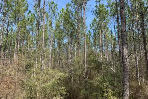Florida Panhandle Hunting and Timber Retreat in Walton, FL (43 of 77)