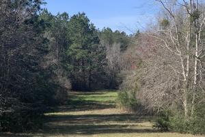 Florida Panhandle Hunting and Timber Retreat in Walton, FL (11 of 77)