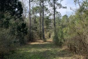 Florida Panhandle Hunting and Timber Retreat in Walton, FL (66 of 77)