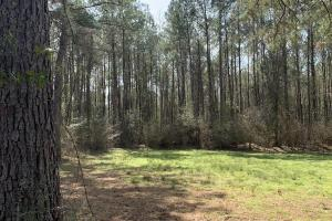 Florida Panhandle Hunting and Timber Retreat in Walton, FL (64 of 77)