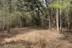 Florida Panhandle Hunting and Timber Retreat in Walton, FL (75 of 77)