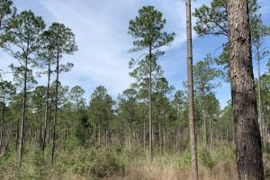 Florida Panhandle Hunting and Timber Retreat in Walton, FL (49 of 77)