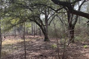 Florida Panhandle Hunting and Timber Retreat in Walton, FL (57 of 77)