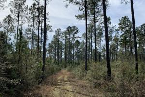 Florida Panhandle Hunting and Timber Retreat in Walton, FL (44 of 77)