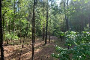Macon Large Residential Lot - Jones County, GA