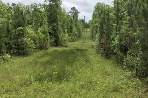 Bethany Town Road Aliceville Hunting & Timber Tract - Pickens County, AL