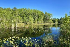 South Lowndes Hunting and Recreational Tract - Lowndes County, GA