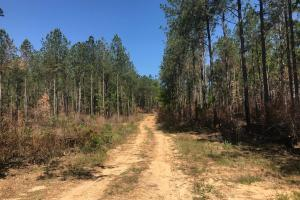 Little Mulberry Creek Hunting & Timber Tract