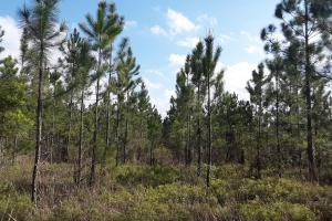 Hilliard Homesite Recreation Tract - Nassau County, FL