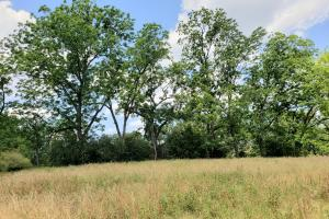 Hurricane Creek Farm & Hunting Investment - Barbour County, AL