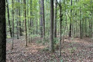 Sulligent Timber And Hunting Investment - Lamar County, AL