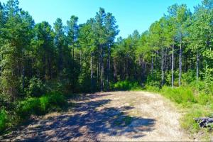 Pea Ridge Timber and Hunting Investment