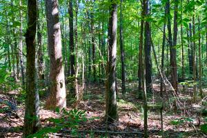 Pea Ridge Timber and Hunting Investment - Fayette County, AL