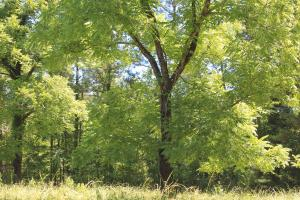 One Acre Lot in the Woods  - Union Parish, LA