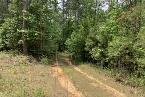 High Value Timber Tract with Excellent Hunting