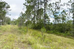 80 Acre Hunting Ground Lake County FL in Lake, FL (4 of 6)