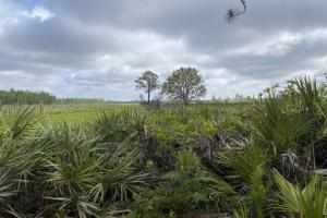 80 Acre Hunting Ground Lake County FL in Lake, FL (5 of 6)