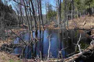 Northern MN Land For Sale! Hecker Rd, Finland, MN (Parcel 1)