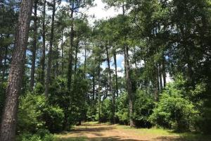 Whispering Pine Acres - Williamsburg County, SC