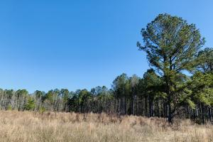 Lynchburg Hunting Tract - Sumter County, SC