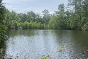 Skipperville Pond and Homesite - Dale County, AL
