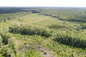 Highway 57 Timber Tract - McIntosh County, GA