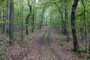 Shelby Hunting & Timber Tract