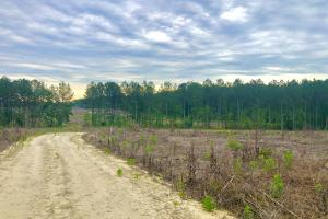 Littleton Reforested Investment  - Halifax County, NC