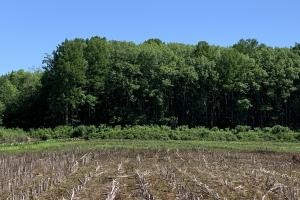 111 Acre Row Crop/Timber/Waterfowl Hunting Tract