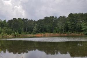Richland Creek Brundidge Timber Investment - Pike County, AL