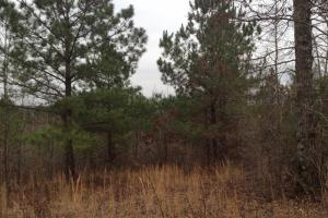 Amsterdam HIll Recreation and Investment Property - Bibb County, AL